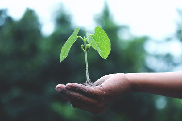 Planting forests - กิจกรรมและงานอีเวนต์ที่น่าสนใจ